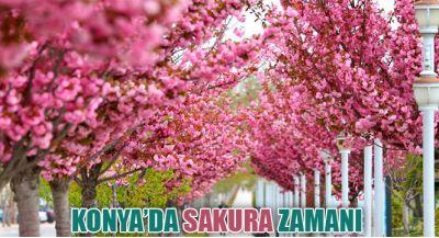 Konya`da Sakura Zamanı