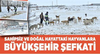 Sahipsiz ve Doıal Hayattaki Hayvanlara Büyükşehir Şefkati