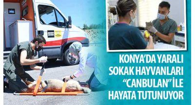"""Konya'da Yaralı Sokak Hayvanları """"Canbulan"""" İle Hayata Tutunuyor"""