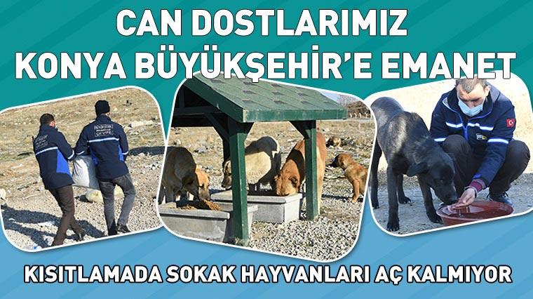 Can Dostlarımız Konya Büyükşehir'e Emanet
