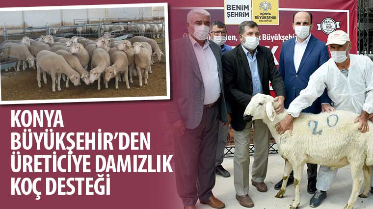 Konya Büyükşehir'den Üreticiye Damızlık Koç Desteği